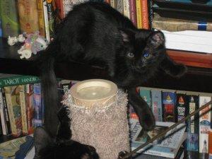 Baby on the Bookshelf