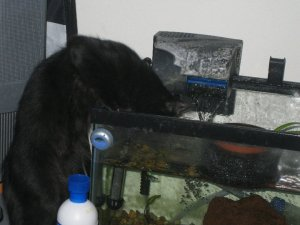Fish?  Whatever.  I want what they're swimming in!